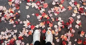 Visit Vilnius in November to see the fallen leaves